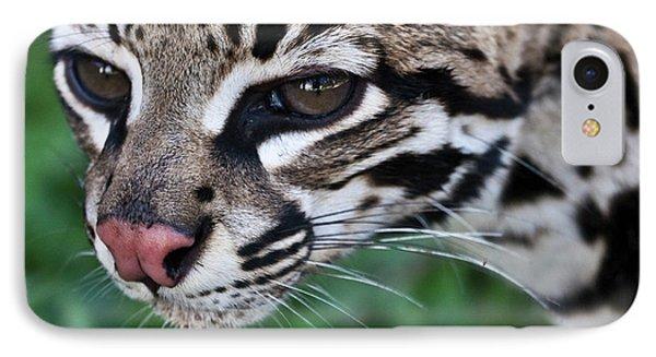 Kitty Ocelot 1 IPhone Case by Heiko Koehrer-Wagner