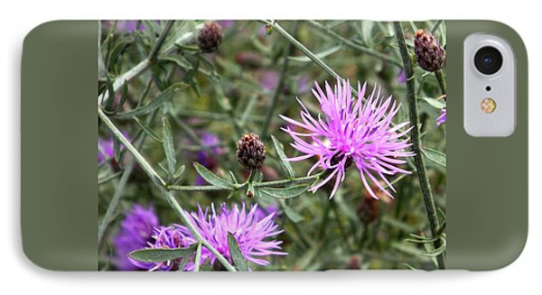 Knapweed IPhone Case by Danielle R T Haney