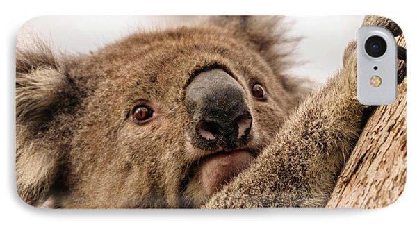 Koala 3 IPhone 7 Case by Werner Padarin