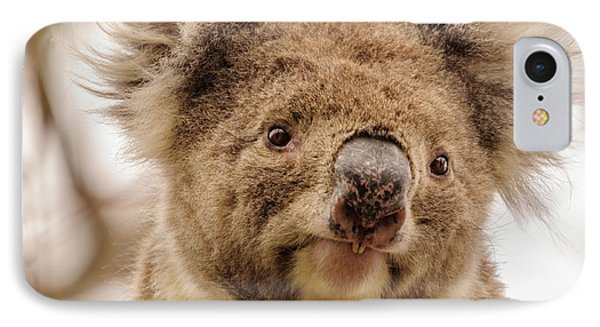 Koala 4 IPhone Case by Werner Padarin