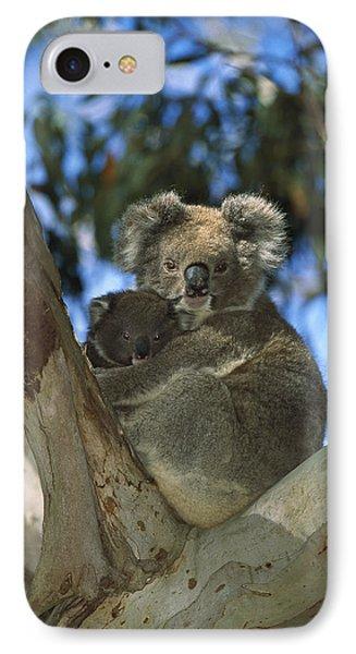 Koala Phascolarctos Cinereus Mother Phone Case by Konrad Wothe