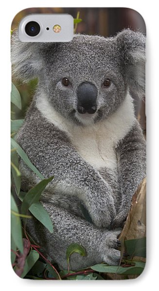 Koala Phascolarctos Cinereus IPhone Case