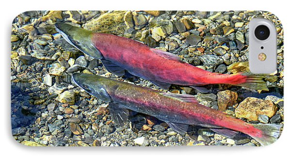IPhone Case featuring the photograph Kokanee Salmon At Taylor Creek by David Lawson