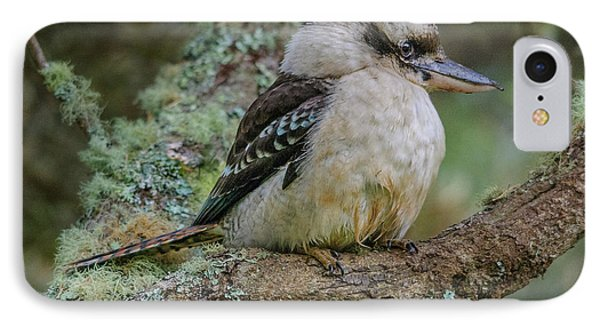 Kookaburra 4 IPhone Case