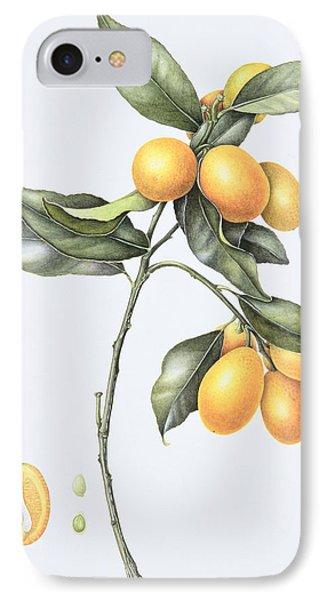 Kumquat IPhone Case by Margaret Ann Eden