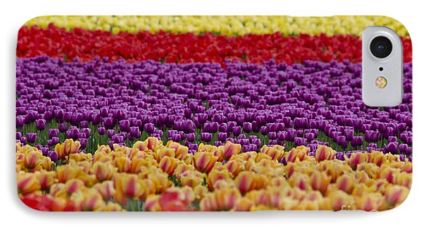 La Conner Bands Of Colour 2015 IPhone Case by Maria Janicki