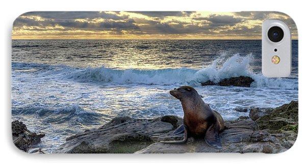 IPhone Case featuring the photograph La Jolla Sea Lion by Eddie Yerkish