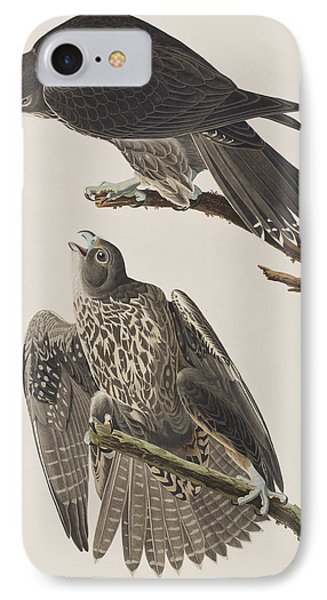 Labrador Falcon IPhone Case by John James Audubon