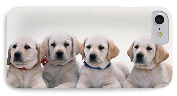 Labrador Puppies IPhone Case by Panoramic Images