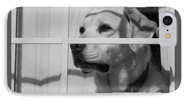 Labrador Retreiver IPhone Case by Brian MacLean
