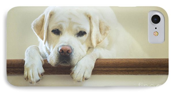 Labrador Retriever On The Stairs IPhone Case