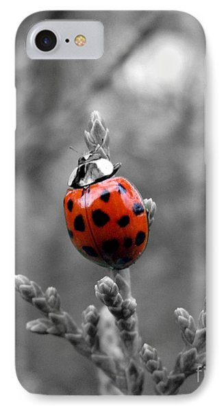 Lady Bug IPhone Case by Misha Bean