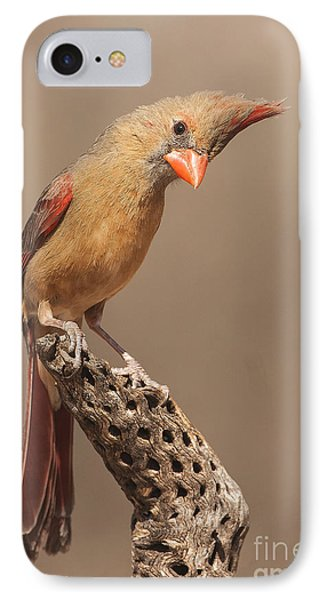 Lady Cardinal And Cholla IPhone Case by Ruth Jolly