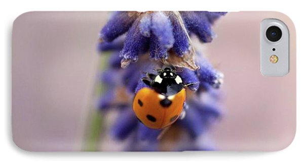 Ladybird On Norfolk Lavender  #norfolk IPhone Case by John Edwards