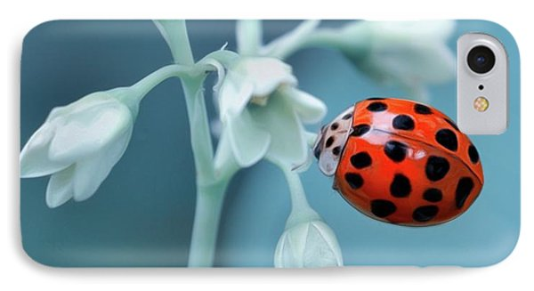 IPhone Case featuring the photograph Ladybug by Mark Fuller