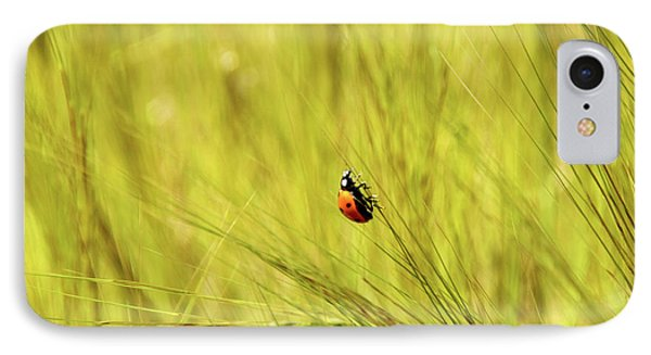 Ladybug In A Wheat Field IPhone Case
