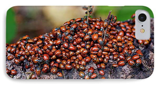 Ladybugs On Branch IPhone 7 Case by Garry Gay