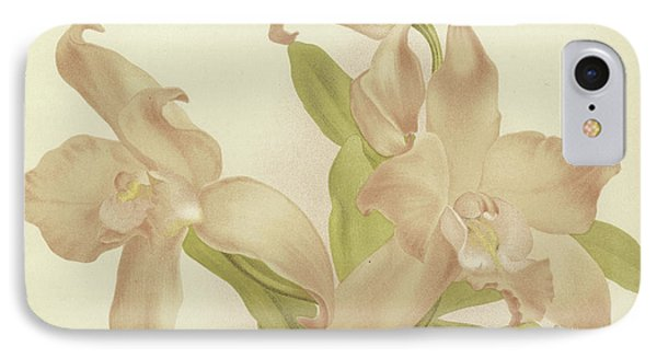 Laelia Autumnalis Venusta IPhone Case by English School