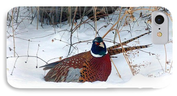 IPhone Case featuring the photograph Lake Country Pheasant 2 by Will Borden