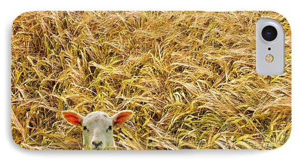 Lamb With Barley IPhone Case by Meirion Matthias