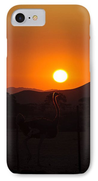 Landscapes - Ostrich Sundown Phone Case by Andy-Kim Moeller