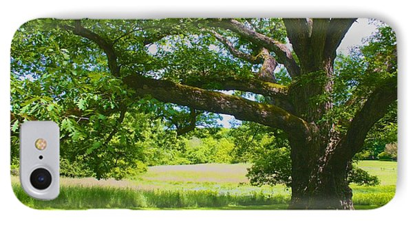 IPhone Case featuring the photograph Large Connecticut Oak by Polly Castor