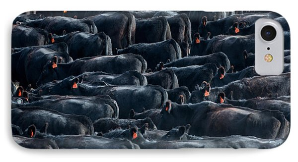 Large Herd Of Black Angus Cattle IPhone Case by Todd Klassy