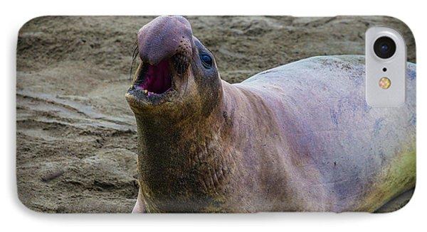 Large Male Elephant Seal IPhone Case