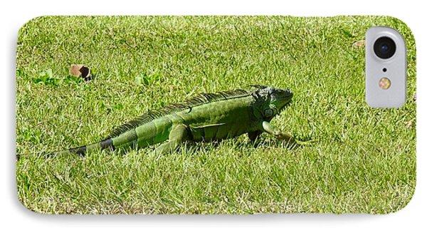 Large Sanibel Iguana IPhone Case