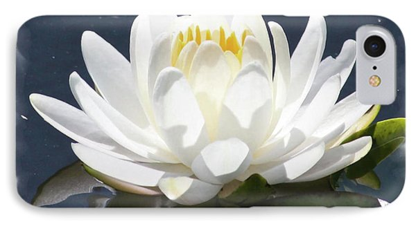 Large Water Lily With White Border Phone Case by Carol Groenen