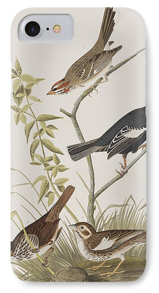 Lark Finch Prairie Finch Brown Song Sparrow IPhone Case by John James Audubon
