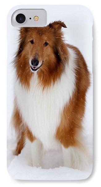 Lassie Enjoying The Snow IPhone Case