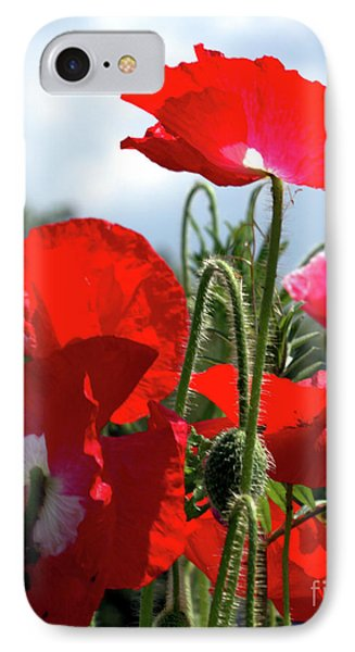 IPhone Case featuring the photograph Last Poppies Of Summer by Baggieoldboy