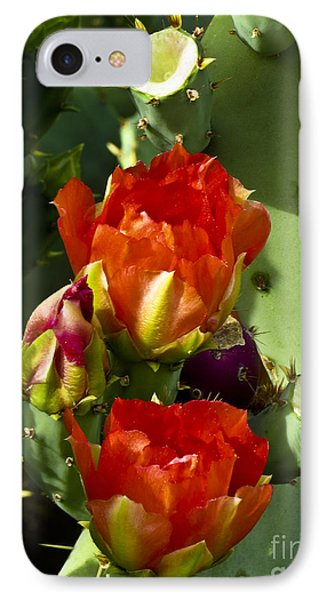Late Bloomer IPhone Case by Kathy McClure
