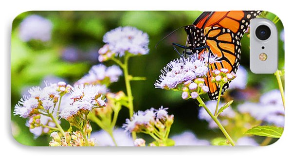 Late In The Season Butterfly IPhone Case by Edward Peterson