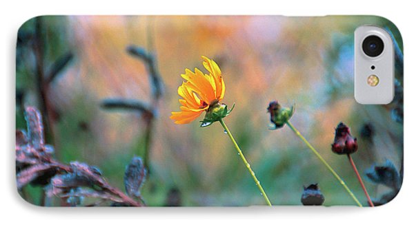 Late Summer Rain From The Forest Floor Phone Case by Bob Orsillo