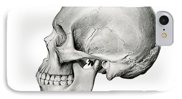Lateral View Of Human Skull IPhone Case by German School