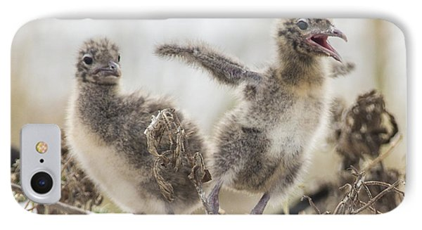 IPhone Case featuring the photograph Laughing Gull Chicks by Paula Porterfield-Izzo