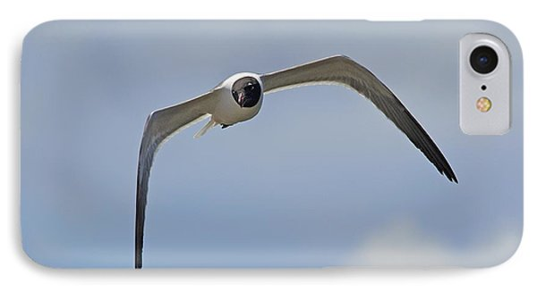 Laughing Gull IPhone Case by Kenneth Albin
