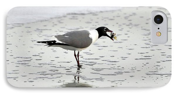 Laughing Gull Meal Phone Case by Al Powell Photography USA