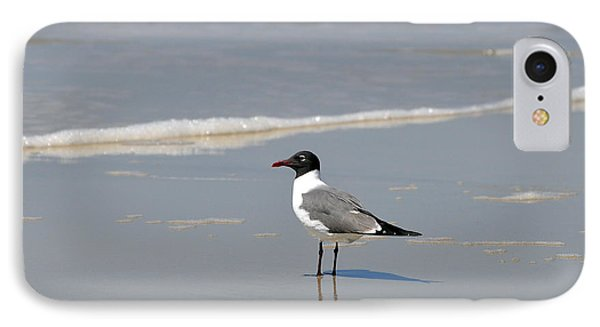 Laughing Gull Reflecting Phone Case by Al Powell Photography USA