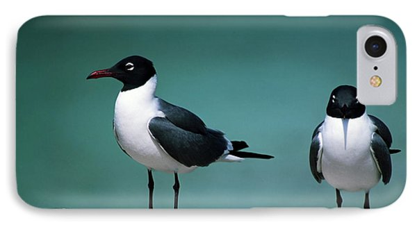 Laughing Gulls IPhone Case by Sally Weigand