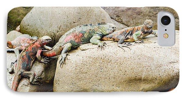 Lava Lizard On Galapagos Islands IPhone Case
