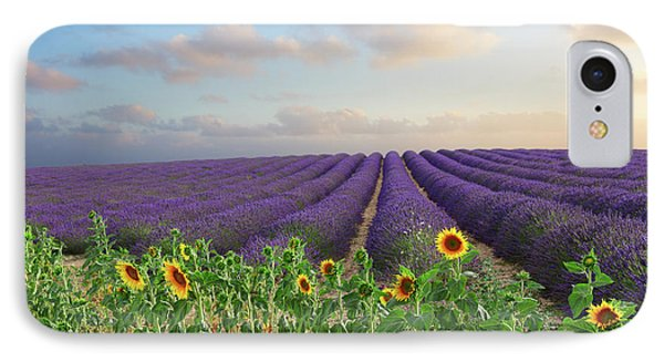 Lavender And Sunflower Flowers Field IPhone Case by Anastasy Yarmolovich