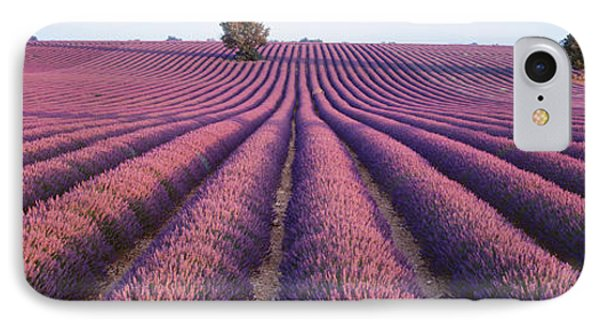 Lavender Field, Fragrant Flowers IPhone Case by Panoramic Images
