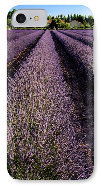 Lavender Field Provence France IPhone Case by Dave Mills
