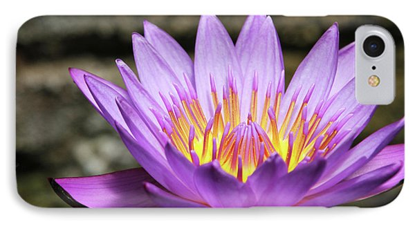 Lavender Water Lily #3 IPhone Case