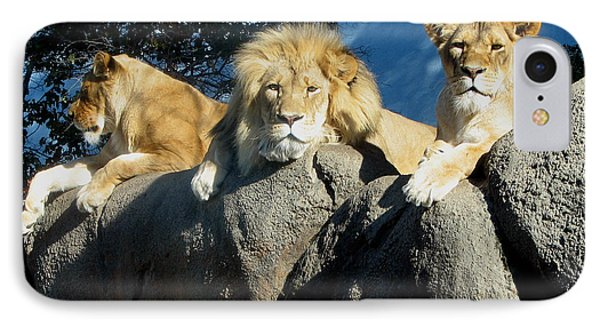 Lazy Day Lions IPhone Case by George Jones