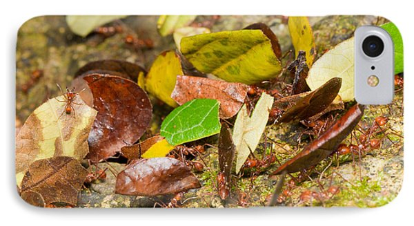 Leaf-cutter Ants IPhone Case by B.G. Thomson