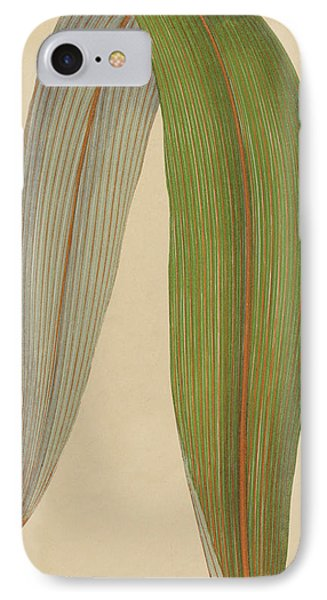 Leaf Of A Mountain Cabbage Tree Or Bush Flax IPhone Case by English School